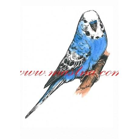 Autorský tisk papoušek andulka