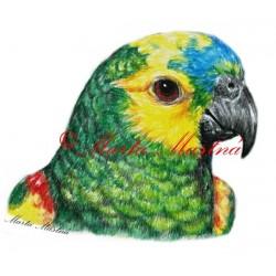 Samolepka amazoňan modročelý, papoušek