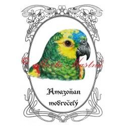 Tabulka amazoňan modročelý, papoušek