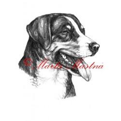 Autorský tisk appenzelský salašnický pes