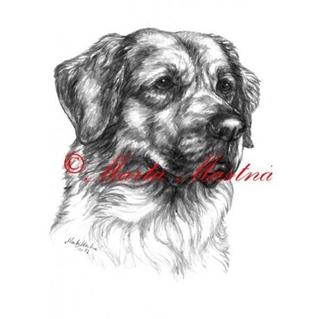 Autorský tisk český horský pes