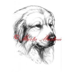 Obraz pyrenejský horský pes, tužka - tisk