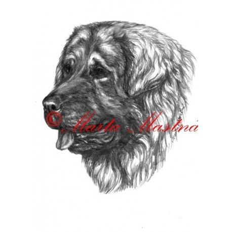Autorský tisk šarplaninský pastevecký pes