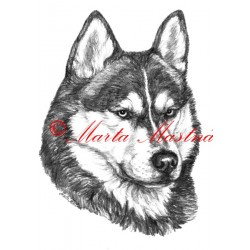 Obraz sibiřský husky, tužka - tisk