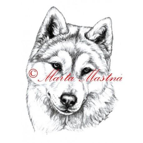 Autorský tisk sibiřský husky