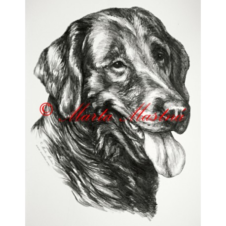 Samolepka flat coated retriever, retrívr