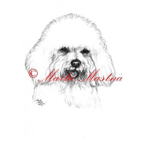Autorský tisk boloňský psík