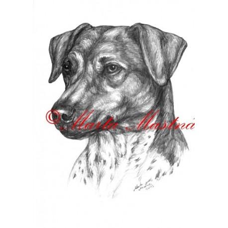 Autorský tisk český strakatý pes