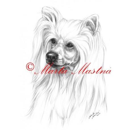 Autorský tisk čínský chocholatý pes