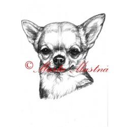 Obraz čivava, chihuahua, tužka - tisk