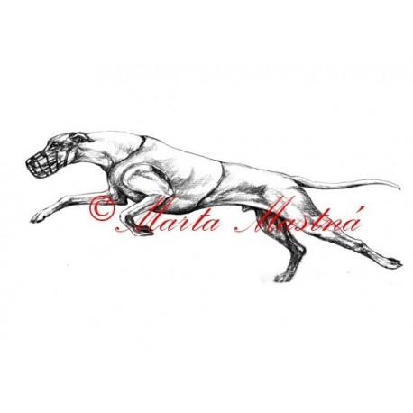 Autorský tisk greyhound, vipet