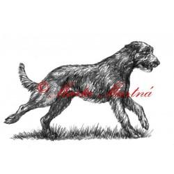 Obraz irský vlkodav, tužka - tisk