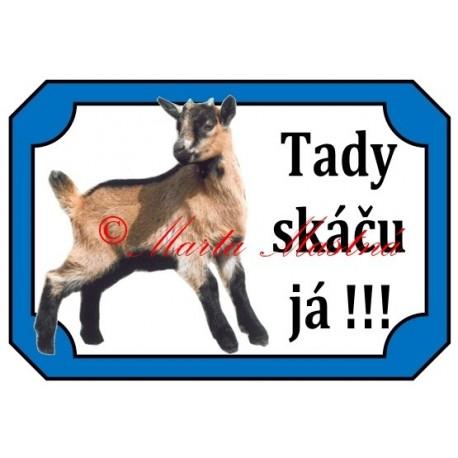 Tabulka koza kamerunská, kůzle