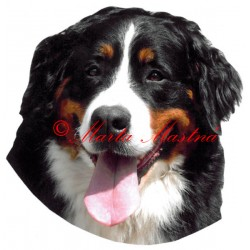 Samolepka bernský salašnický pes