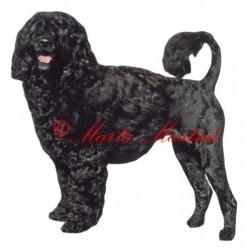 Samolepka portugalský vodní pes