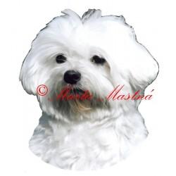 Samolepka maltézský psík stříhaný