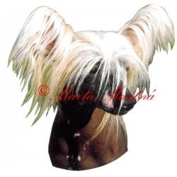 Samolepka čínský naháč, chocholatý pes