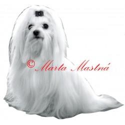 Samolepka maltézský psík - archiv