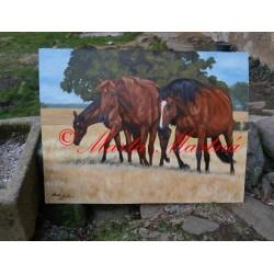 Portrét koní na pastvině