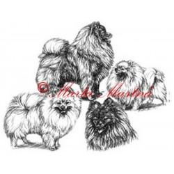 Logo Klubu chovatelů špiců