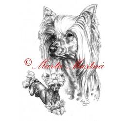 Portrét čínský chocholatý pes