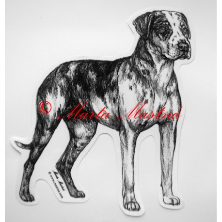 Catahoula louisiana leopard dog