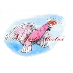 Autorský tisk papoušek kakadu inka