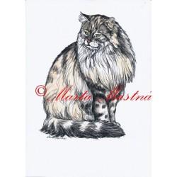 Autorský tisk kočka sibiřská