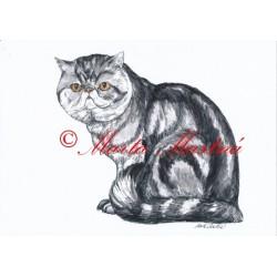 Autorský tisk kočka exotická
