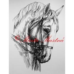 Samolepka kladrubský kůň, koně