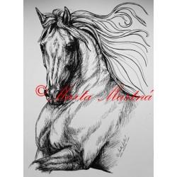 Samolepka kůň andaluzan, pura raza espaňola - dvě velikosti