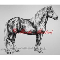Samolepka kůň chladnokrevník, českomoravský belgik