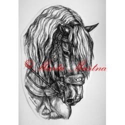 Samolepka norik, chladnokrevník, kůň, koně
