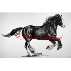 Samolepka cob, irský tinker, shire, kůň, koně