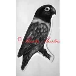 Papoušek agapornis