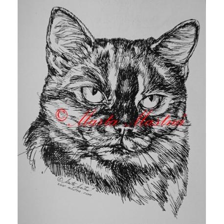 Kočka krátkosrstá želvovinová