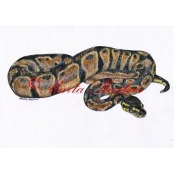 Obraz krajta královská, had, akvarel - tisk