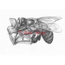 Autorský tisk včela