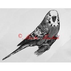 Samolepka andulka, papoušek vlnkovaný