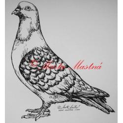 Samolepka holub moravský pštros