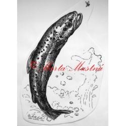 Samolepka pstruh, ryba, ryby