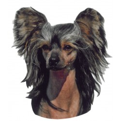 Samolepka čínský chocholatý pes