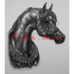 Samolepka arabský plnokrevník, kůň, koně