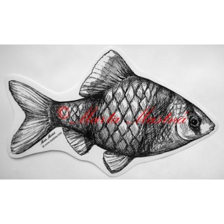 Akvarijní ryba, parmička