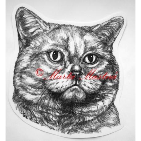 Kočka krátkosrstá