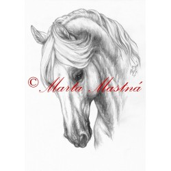 Obraz kladrubský kůň, koně, tužka - tisk