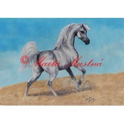 Obraz arabský plnokrevník, kůň, koně, olejomalba - tisk