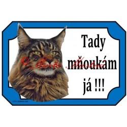 Tabulka kočka mainská mývalí, maine coon