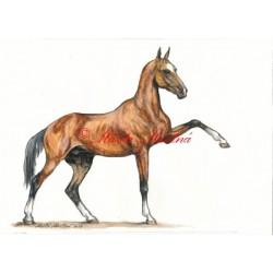 Obraz achaltekinec, achal-teke, akvarel - tisk