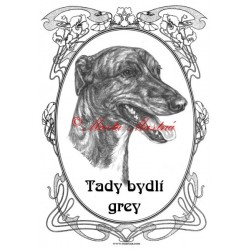 Tabulka anglický chrt greyhound